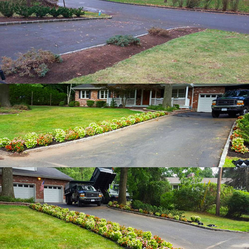 Before and After Plant Installat